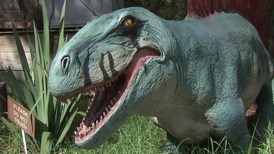 Step Back In Time At Zootampa S Dino S Alive Exhibit
