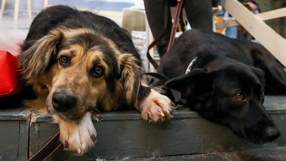 Pet adoption event at Moscow's Artplay Design Centre