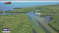 Drone Zone: Tampa Bay Estuaries