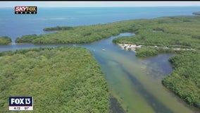 Drone Zone: Tampa Bay Estuaries