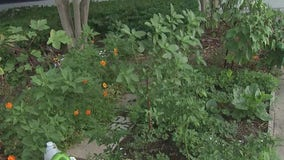 How to prep your garden in the face of a tropical system