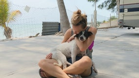 Dog living near Mexican beach adopted after befriending couple living in their RV