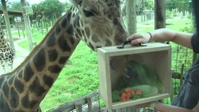 ZooTampaoffers sneak peek at what goes into feeding more than 1,000 animals a day