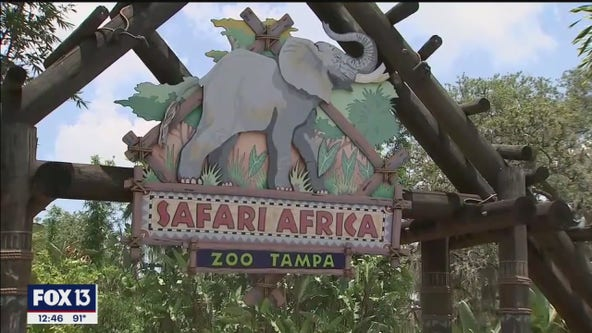 Checking in with ZooTampa at Lowry Park