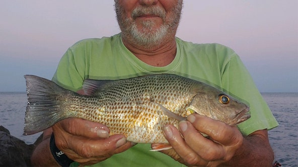 You'll find lots of hungry snapper inshore
