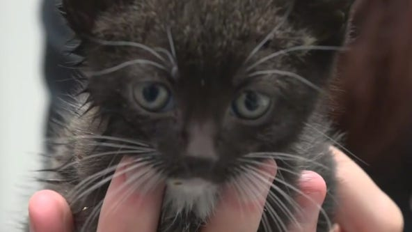 Humane Society of Tampa Bay has been busy during the pandemic