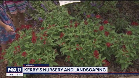 Building a butterfly garden