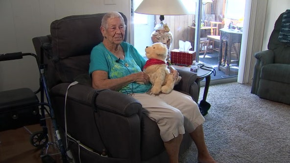 Robotic animals help isolated seniors find companionship during pandemic