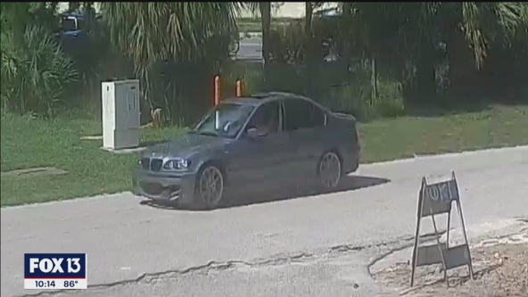 BMW spotted leaving scene of hit-and-run crash at Humane Society of Tampa Bay