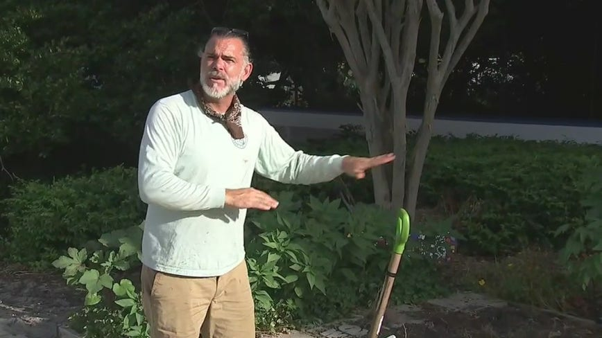 How to treat your garden during the hot holiday weekend