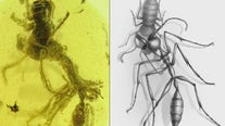 Prehistoric 'Hell Ant' discovered by scientists
