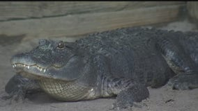 Meet the reptiles of Croc Encounters