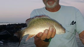 Fishing Report: August 7, 2020