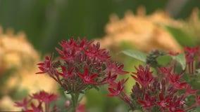 Wander through Largo's Florida Botanical Gardens
