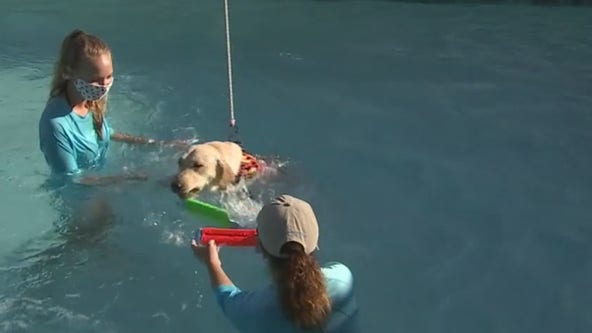 Southeastern Guide Dogs head back to school