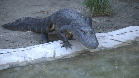 Croc Encounters has been home to unwanted reptiles for 15 years