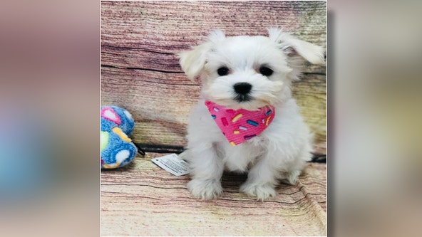 Hillsborough deputies searching for man who stole $3,000 puppy from Tampa pet store
