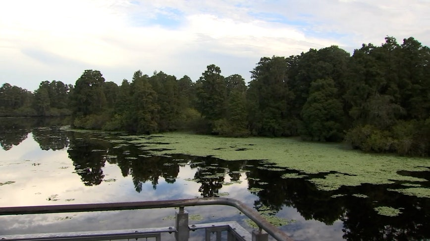 A slice of 'old Florida' can be found in Lettuce Lake Park