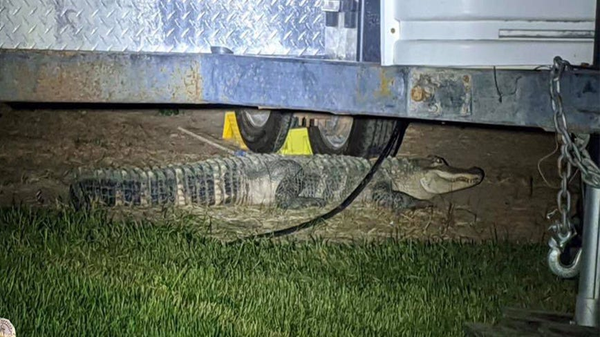 'This is Nampa…not Tampa': Idaho police baffled over call about 6-foot alligator