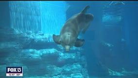 Clearwater Marine Aquarium offering online programs