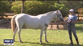Plant City equestrian facility teaches art of eventing