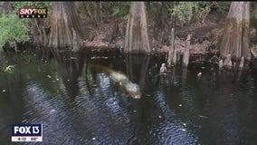 Green Swamp keeps Florida waterways clean