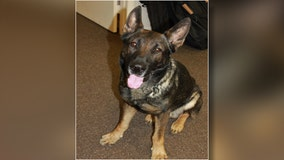 K9 helps capture teens in stolen car with concealed firearms following crash in Wesley Chapel