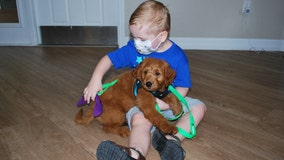 Young cancer survivor gives puppy to Bradenton child who completed chemotherapy for brain tumor