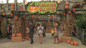 'Creatures of the Night' come out at ZooTampa during family-friendly haunted event