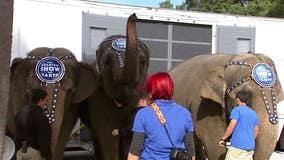 Former circus elephants begin to arrive at Florida wildlife sanctuary