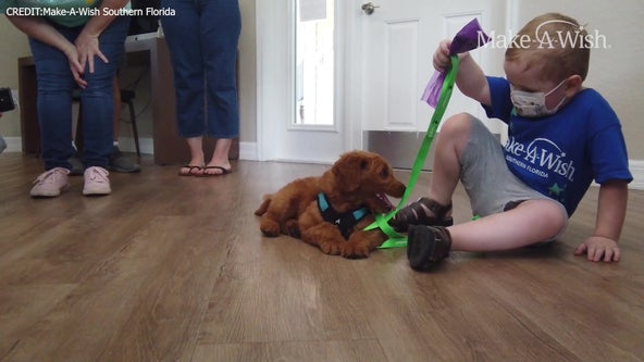 Young cancer patient receives 'wish' puppy