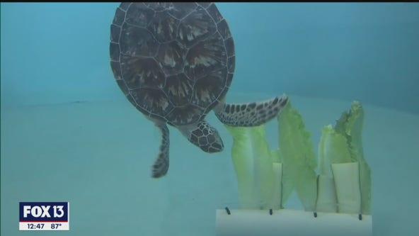 Inside Florida Aquarium's Apollo Beach facility