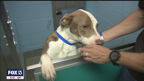 Rescued animals get ready for new homes