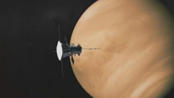 Could there be life in Venus' cloud-tops?