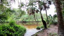 Take a tour of Rye Preserve, one of Manatee County's 'hidden gems'