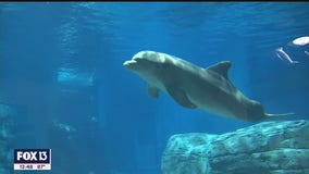 Clearwater Marine Aquarium expands during pandemic