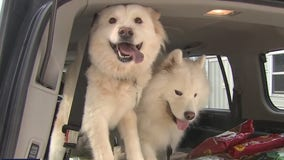 Humane Society helps pet owners who need food