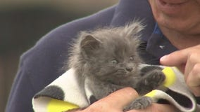 Nate's Honor Animal Rescue is the middle of expanding