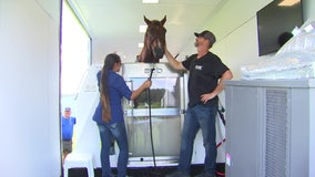 Mobile rehabilitation technology helps horses regain quality of life