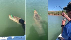 Fisherman reels in massive crocodile, struggles to get lure back