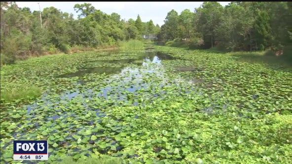 Escape to the oasis of the Florida Botanical Garden