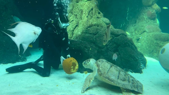 Halloween under the sea: Florida Aquarium offers trick-or-treating alternative