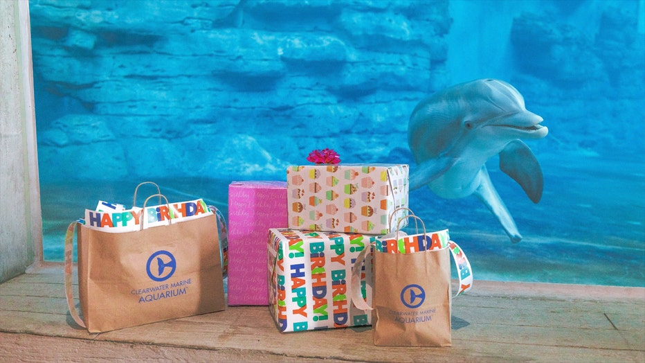 Winter the dolphin swims near presents