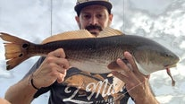 Redfish action staying steady inshore