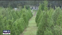 Ergle Christmas Tree Farm has busy season