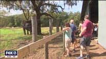 Myakka Elephant Ranch hidden gen of Florida