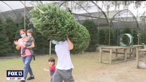 Busy opening weekend at Christmas tree farm as Floridians welcome holidays