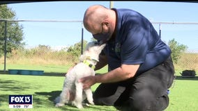 One year later, dogs rescued from Tampa breeder reunited