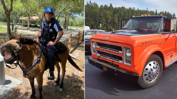 1967 Chevy C50 & Hiccup the patrol horse