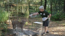 Tiger mauls Big Cat Rescue volunteer